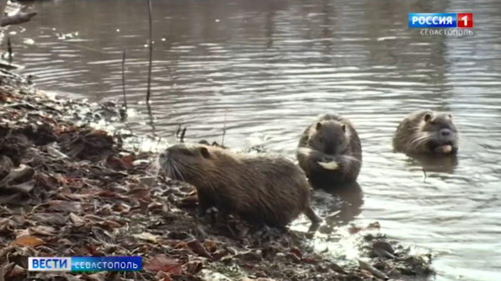 Севастопольские учёные проверили качество воды в речке Чёрная и покормили нутрий