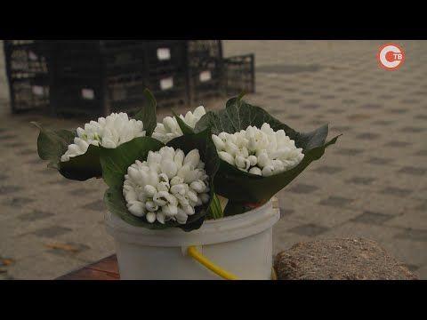 Торговцы краснокнижными подснежниками появились на рынках Севастополя (СЮЖЕТ)