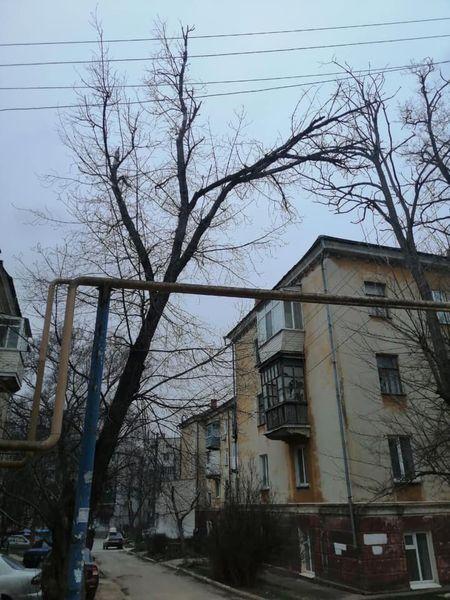 В Керчи дерево чуть не рухнуло на газовую трубу