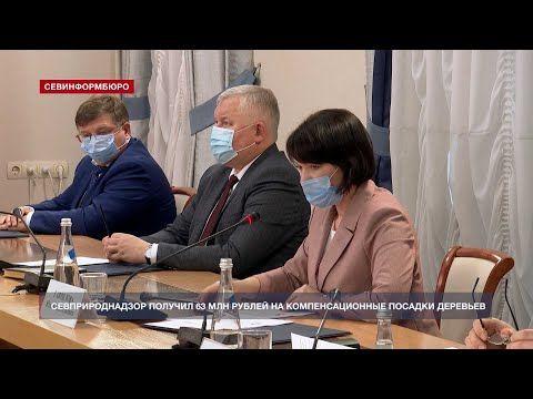 Севприроднадзор получил 63 миллиона рублей на компенсационные посадки деревьев