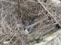 В Партените мужчина упал в реку и трёх метров и травмировался