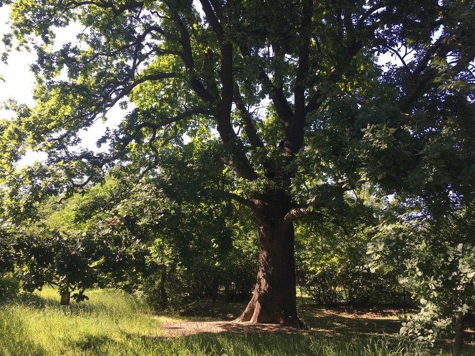 На баланс Симферополя передадут больше 600 гектар городских лесов