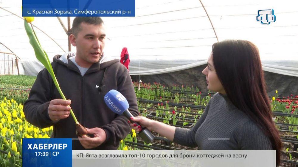 Более ста тысяч тюльпанов этой весной планируют реализовать крымские цветоводы