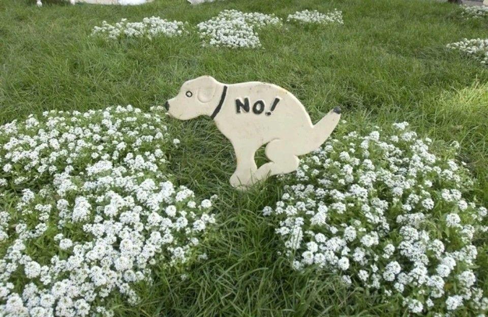 Везде экскременты: В Евпатории мемориала «Красная горка» превратили в собачий парк