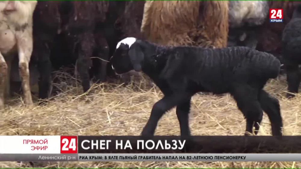 Снежный циклон принёс пользу керченским фермерам и наполнил водохранилища