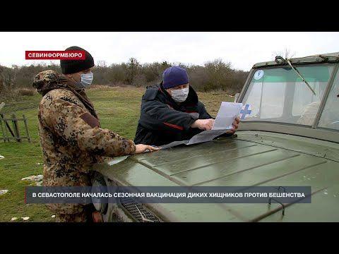 Внимание, бешенство: в Севастополе началась сезонная вакцинация диких хищников