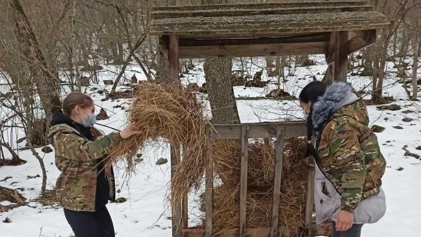 Воспитанники школьного лесничества «Росток» в условиях зимних холодов осуществляют подкормку диких животных