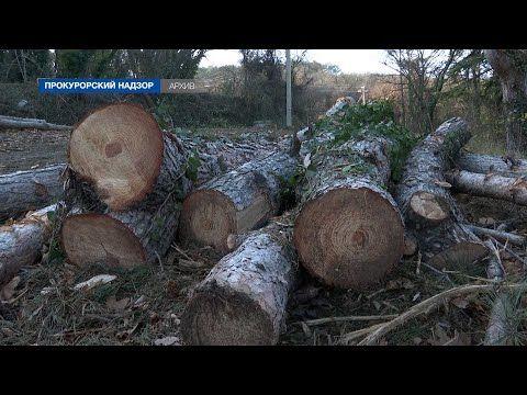 Уголовное дело за вырубку деревьев на «Максимовой даче» и контроль за питанием севастопольских школьников – Прокурорский надзор