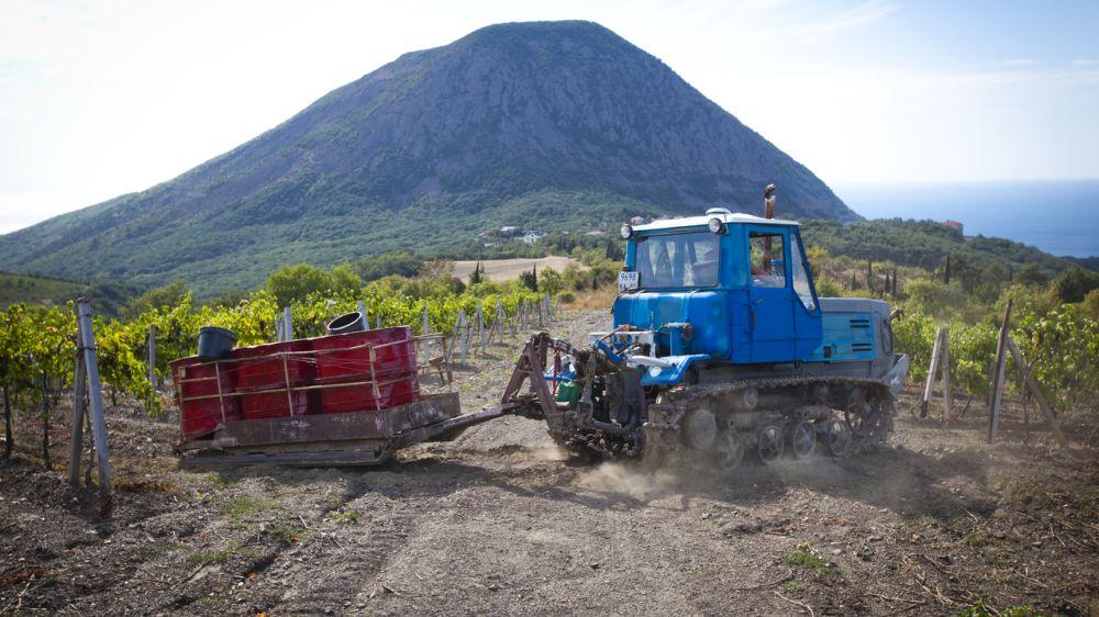 Правительство Крыма защитило особо ценные продуктивные сельскохозяйственные угодья