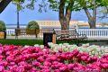 В Севастополе высадят цветы на территории более 12 тысяч квадратных метров