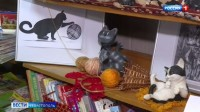 Как в Севастополе отмечают День кошек