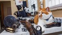 Пули, деньги, микроскопы: как на самом деле работают криминалисты
