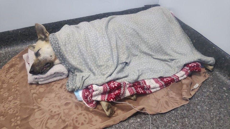 Кефира убивали на детской площадке: В Симферополе бездомный пес стал жертвой бесчеловечности