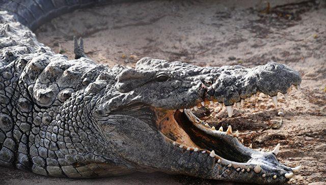 Мужчина два часа сражался с нильским крокодилом и выжил