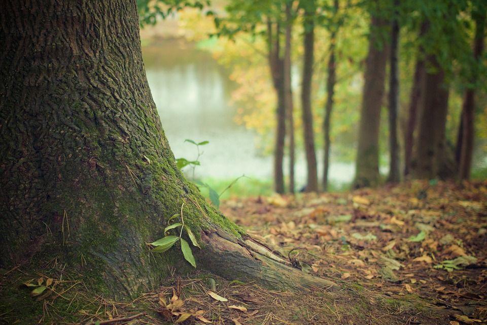 В Минэкологии Крыма прокомментировали ситуацию с деревьями в Форосском парке