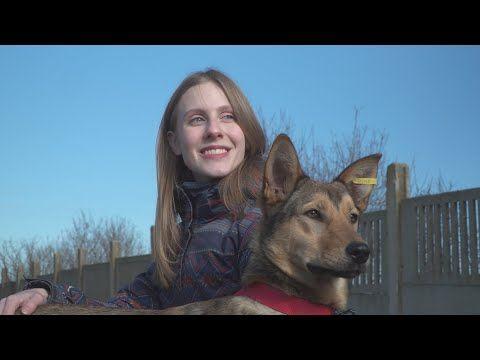 Бездомные животные Севастополя участвуют в проекте «Тут ваша собака» (СЮЖЕТ)