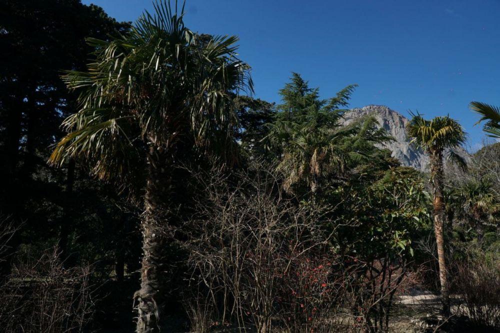 Глава Крыма обяжет застройщиков высаживать по 5 деревьев на каждое вырубленное или повреждённое