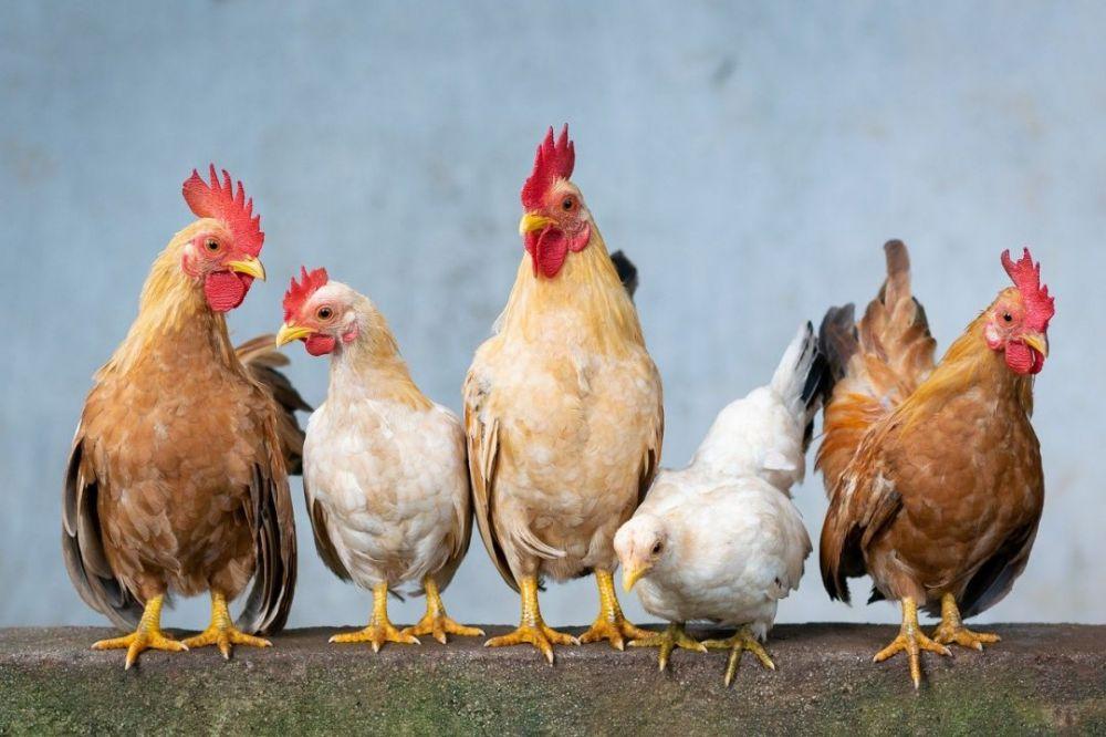 Производители мяса птицы и яиц в России договорились о сдерживании цен