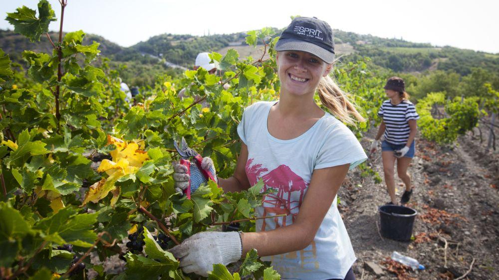 Минсельхоз Крыма объявил прием документов на получение единовременной помощи специалистам, трудоустроившимся в сельской местности