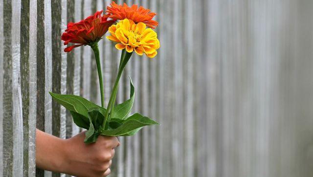 Флористы назвали самые недооцененные цветы к 8 Марта