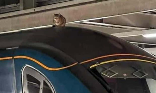 Скоростной поезд в Лондоне задержали из-за отдыхавшего на крыше кота