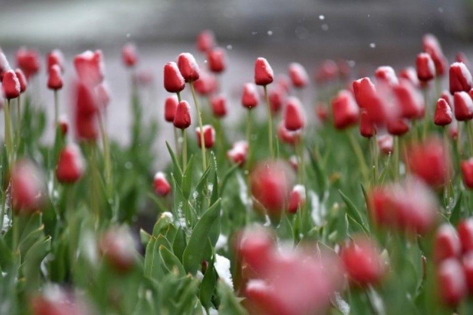Мокрый снег и похолодание: Какая погода ждет крымчан в преддверии 8 марта