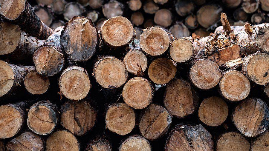 Минпром Крыма информирует об изменениях требований к учету, переработке и хранению древесины