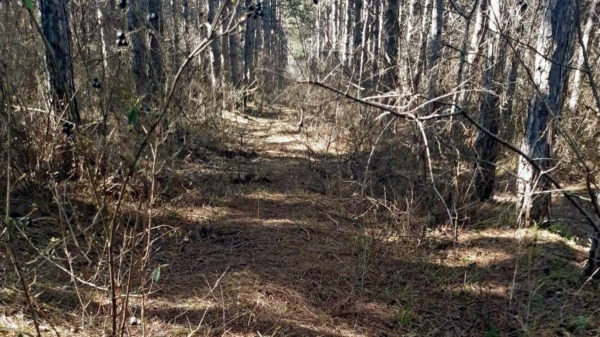 Лесоохотничьими хозяйствами, подведомственными Минприроды Крыма, проведена уборка лесного массива по улице Балаклавская в Симферополе