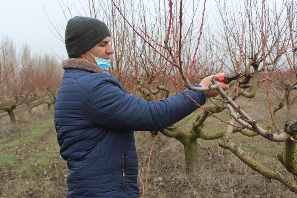 Крымские садоводы получат более 440 миллионов рублей