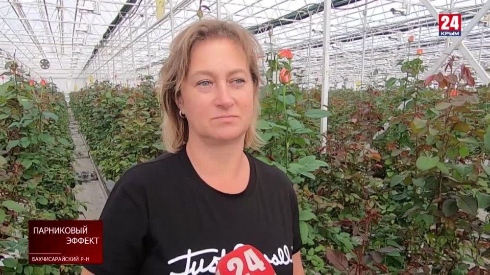 На полуострове возрождаются тепличные хозяйства