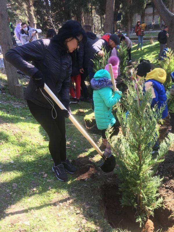 В НБС рассказали, когда приживутся новые деревья в парке «Форос»