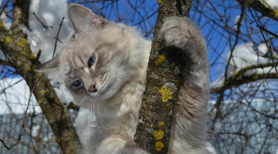 В понедельник в Крыму до 7 градусов тепла, дождь, мокрый снег