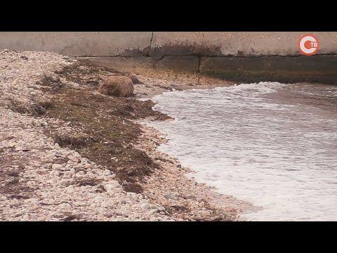 В Севастополе городские пляжи начали готовить к курортному сезону (СЮЖЕТ)