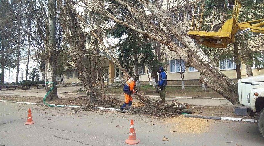 Симферопольские коммунальщики спилили и вывезли поваленные ветром деревья