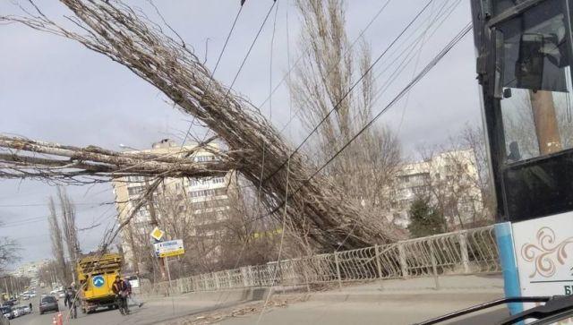 Улицы Симферополя перегородили поваленные ветром деревья – фото
