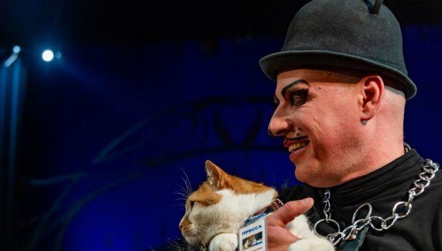 Самый известный кот русской литературы дал советы Мостику