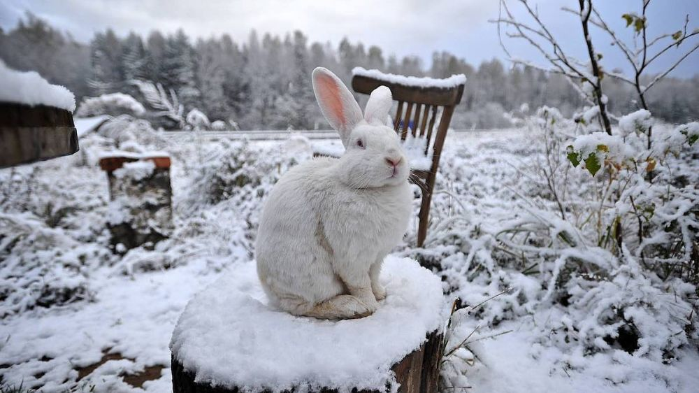 Синоптики предсказали снег в Крыму в конце недели