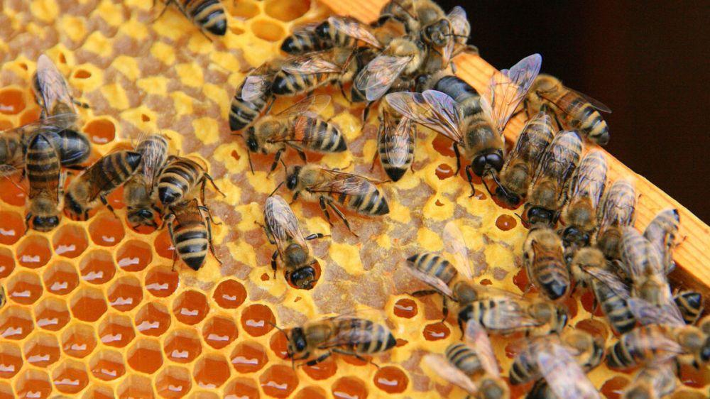 Специалисты ГБУ РК «Красногвардейский районный ВЛПЦ» приняли участие в совещании с пчеловодами Красногвардейского района Республики Крым