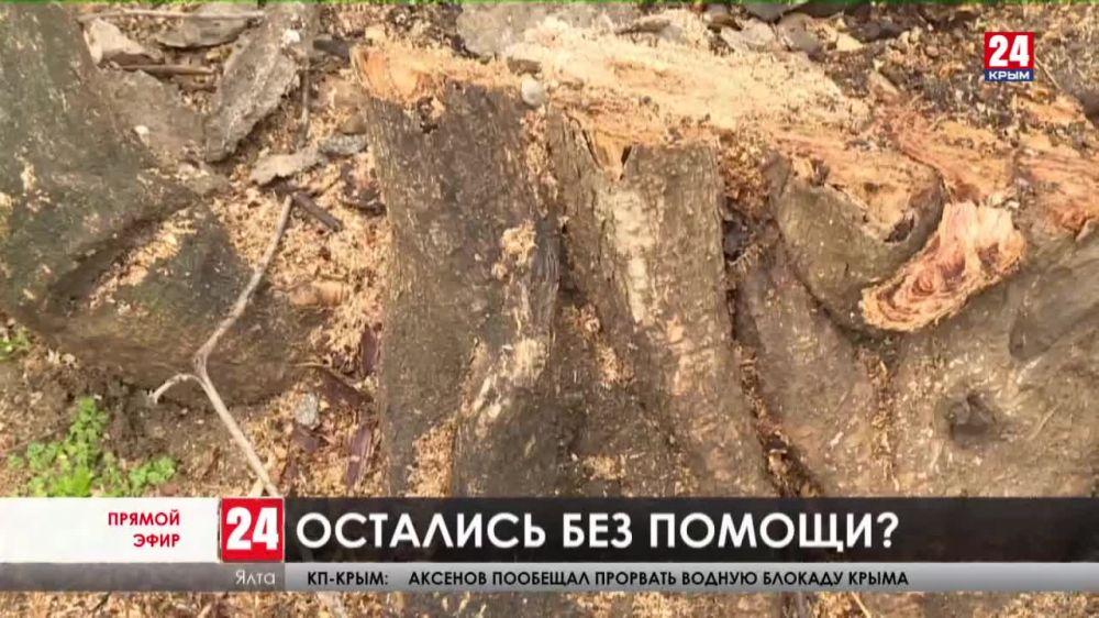 Деревья повредили, ремонт забросили. Жители Ялты переживают о судьбе детской больницы
