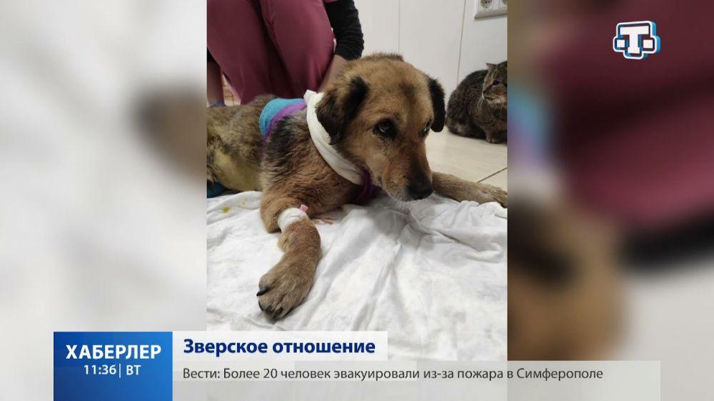 В Симферополе спасают дворнягу: правоохранители выясняют, что произошло