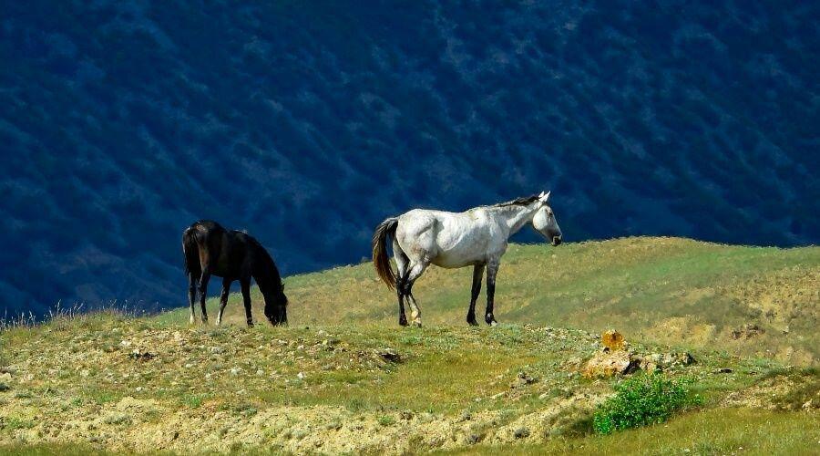 Организатор конных прогулок пойдет под суд из-за травмирования туристки в Севастополе
