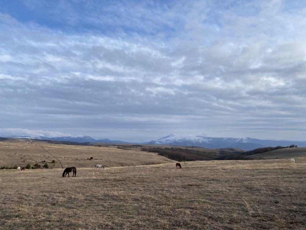 В Севастополе будут судить организатора конной прогулки, на которой женщина получила травмы