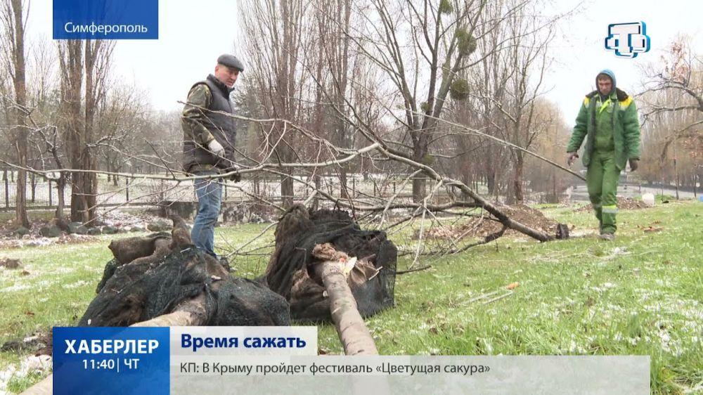 Берёзы, дубы, хвойные: в Симферополе высаживают деревья