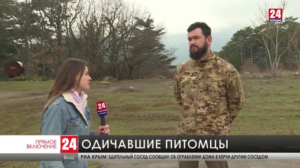 В Ялтинском горно-лесном заповеднике участились случаи нападения на косуль