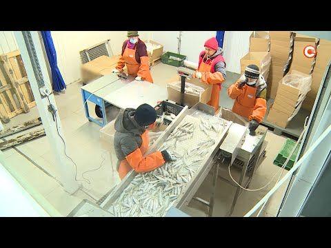 Севастопольский бизнес год живет в условиях пандемии (СЮЖЕТ)