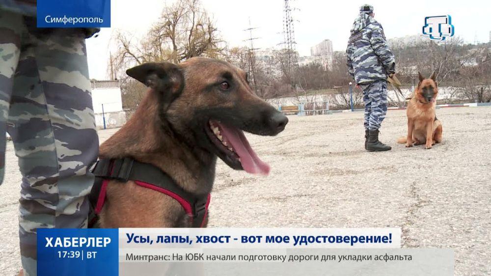Показательные выступления служебных собак прошли в Симферополе
