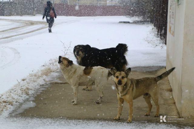 Полиция выяснит обстоятельства убийства нескольких бездомных собак в Старом Крыму