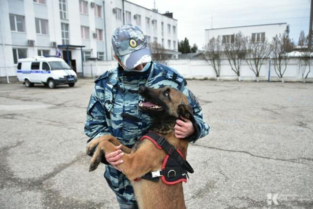 Четвероногие полицейские: как живут служебные собаки в Симферополе