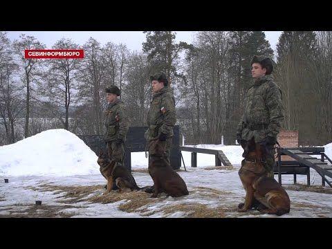 Кинологи ЗВО провели конкурс «Найти и обезвредить» в Ленинградской области