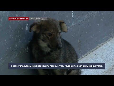 В севастопольском УМВД обещали пересмотреть решение по собачьему «концлагерю»
